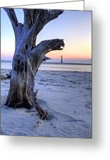 Old Tree And Morris Island Lighthouse Sunrise Greeting Card
