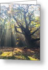 Old Tree And Sunbeams Greeting Card