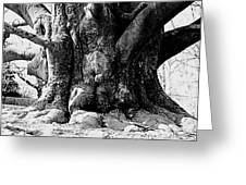 Old Tree Ground Up Greeting Card