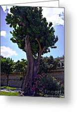 Old Tree In Palermo Greeting Card