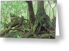 Old Tree Root Greeting Card