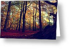 Old Tree Silhouette In Fall Woods Greeting Card