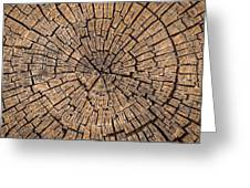 Old Tree Stump Greeting Card
