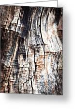 Old Tree Stump Tree Without Bark Greeting Card