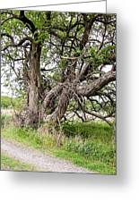 Old Weathered Tree Greeting Card