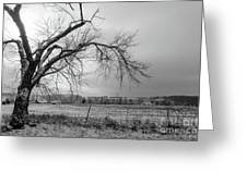 Old Winter Tree Grayscale Greeting Card