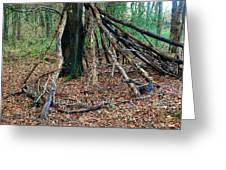 Old Woodland Hide. Greeting Card
