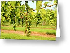 Old York Winery Grapes Greeting Card