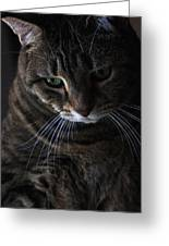 Ole Green Eyes Greeting Card