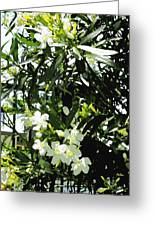 Oleander 2018 Greeting Card