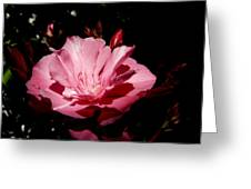 Oleander Bloom Greeting Card