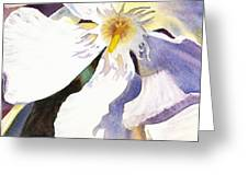 Oleander Close Up  Greeting Card