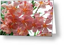 Oleander Dr. Ragioneri 4 Greeting Card