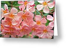 Oleander Dr. Ragioneri 5 Greeting Card