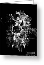 Oleander Flowers In Black And White 2 Greeting Card