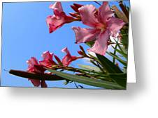 Oleander Flowers Wilting In The Brutal Florida Sun  Greeting Card