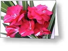Oleander Geant Des Batailles 1 Greeting Card