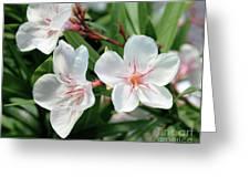 Oleander Harriet Newding 3 Greeting Card