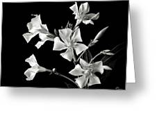 Oleander In Black And White Greeting Card by Endre Balogh