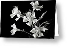 Oleander In Black And White Greeting Card