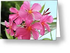 Oleander Maresciallo Graziani 1 Greeting Card