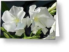 Oleander Mont Blanc 1 Greeting Card