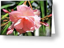 Oleander Mrs. Roeding 3 Greeting Card