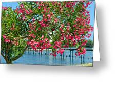 Oleander On Melbourne Harbor In Florida Greeting Card