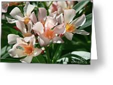 Oleander Petite Salmon 1 Greeting Card