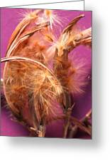 Oleander Seed Pods Greeting Card