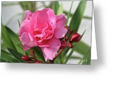 Oleander Splendens Giganteum 1 Greeting Card