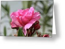 Oleander Splendens Giganteum 2 Greeting Card