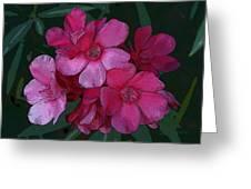 Oleanders In Pink Greeting Card