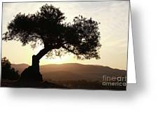 Olive At Sunset Greeting Card