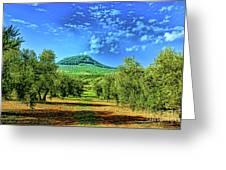 Olive Grove Spain Greeting Card