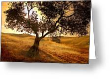 Olive Tree Dawn Greeting Card