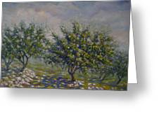 Olive Tree Field Greeting Card