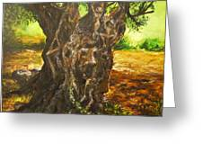 Olive Tree Rooted 1 Greeting Card