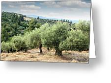 Olive Trees Hill Greeting Card