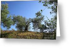 Olive Trees Near Olvera Greeting Card
