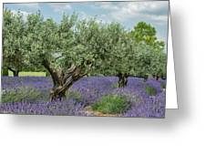 Olive Trees Of Provence Greeting Card