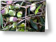 Olives Greeting Card by Mindy Newman
