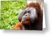 Ollie The Orangutang Greeting Card