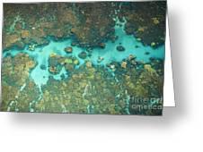 Olowalu Coral Greeting Card