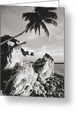 Olowalu Driftwood Greeting Card