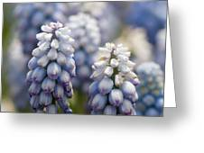 Ombre Blue - Square Greeting Card