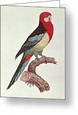 Omnicolored Parakeet Greeting Card