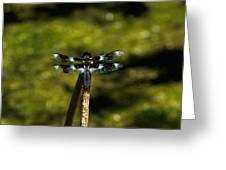 On A Stick Greeting Card