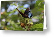 On Blue Wings Greeting Card