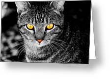 On Cat Watch Greeting Card